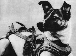 Laika, first in space!