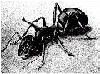 The amazing ant