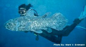 Coelacanth photo by Mark. V. Erdman