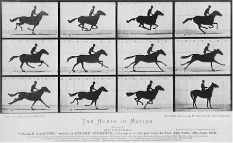 Eadweard Muybridge galloping horse