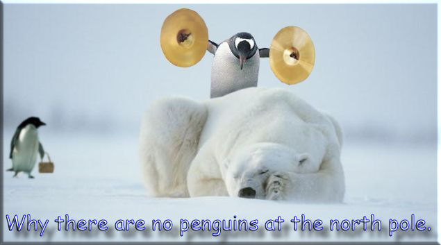 Why there are no penguins on the North Pole