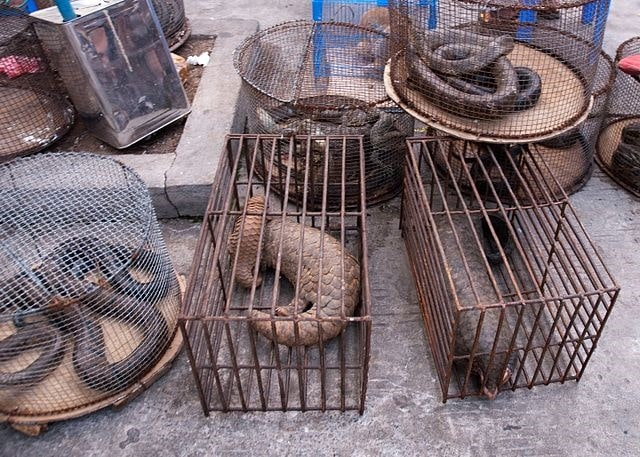 Illicit endangered wildlife trade