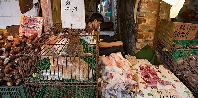 Wet market wildlife trade horrible conditions