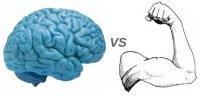 brain vs muscle